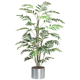 Japanese Bamboo Palm Tree - 5ft £103 - Office Furnishings