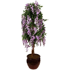Pale Lilac Wisteria - 5ft £0 - Office Furnishings