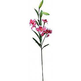 Single Stem Asiatic Lily - Pink / White £0 - Office Furnishings