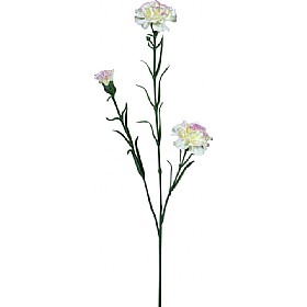 Triple Stem Carnation - White Tinted with Purple £0 - Office Furnishings