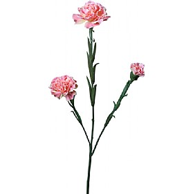 Triple Stem Carnation - Pink £0 - Office Furnishings