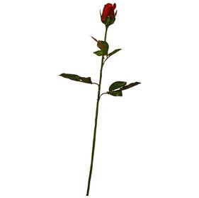 Single Stem Closed Bud Rose - Red £0 - Office Furnishings