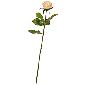 Single Stem Half Open Rose - White £0 - Office Furnishings