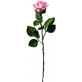 Single Stem Half Open Rose - Pale Pink £0 - Office Furnishings
