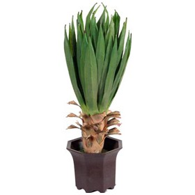 Yucca £0 - Office Furnishings