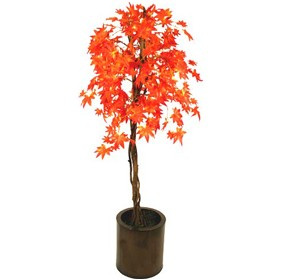 Red Japanese Maple with Natural Stem - 5ft £0 - Office Furnishings
