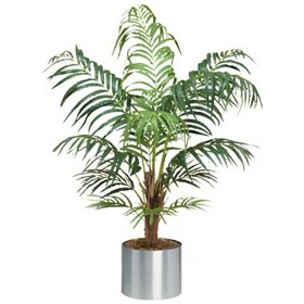 Deluxe Areca Palm - 4ft £0 - Office Furnishings