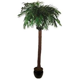 Coconut Tree - 9ft £267 - Office Furnishings