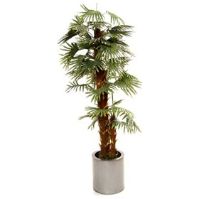 Palm Tree - 6ft £0 - Office Furnishings