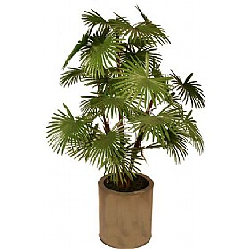 Rhapis Fortunei Palm Tree - 5ft £0 - Office Furnishings