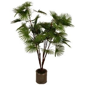 Palm Tree - 5ft £68 - Office Furnishings