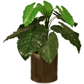 2ft Taro Plant £0 - Office Furnishings