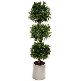 5ft Triple Bay Ball Topiary with Natural Stem £128 - Office Furnishings