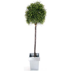 5ft Tea Tree Topiary with Natural Stem £0 - Office Furnishings