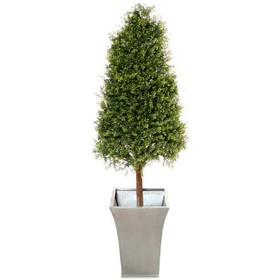 4ft Tea Tree Topiary Pyramid with Natural Stem £124 - Office Furnishings