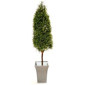5ft Tea Tree Topiary Pyramid with Natural Stem £0 - Office Furnishings