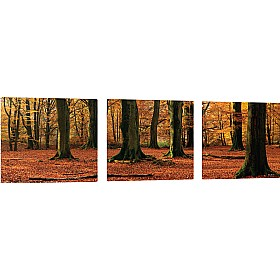 Pin Panelz Panoramic Autumn Forest Noticeboards £168 - Display/Presentation