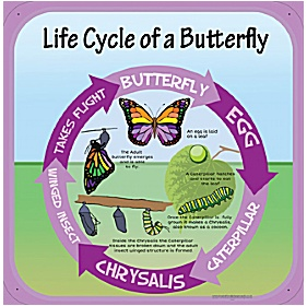Life Cycle Of A Butterfly Sign £20 - Education Furniture