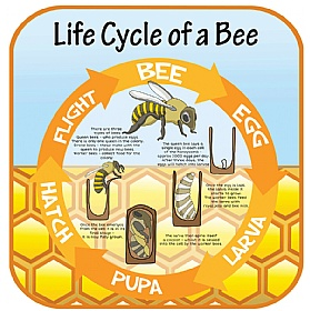 Life Cycle Of A Bee Sign £20 - Education Furniture