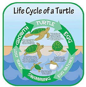 Life Cycle Of A Turtle Sign £0 - Education Furniture