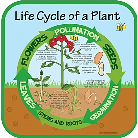Life Cycle Of A Plant Sign £0 - Education Furniture