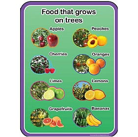 Healthy Eating Food From Trees Sign £0 - Education Furniture