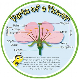 Pollination (Parts Of A Flower) Sign £0 - Education Furniture