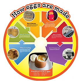 How Eggs Are Made Food Cycle Sign £0 - Education Furniture