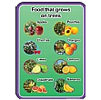 Healthy Eating Food From Trees Sign