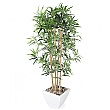 Golden Bamboo Tree - 5ft